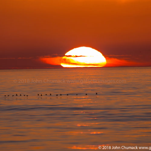 Sunset close-up with sea birds