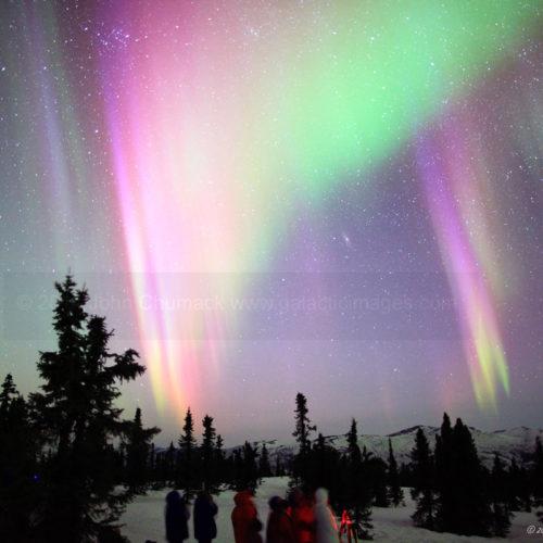 Alaska Aurora Borealis Photo #1646