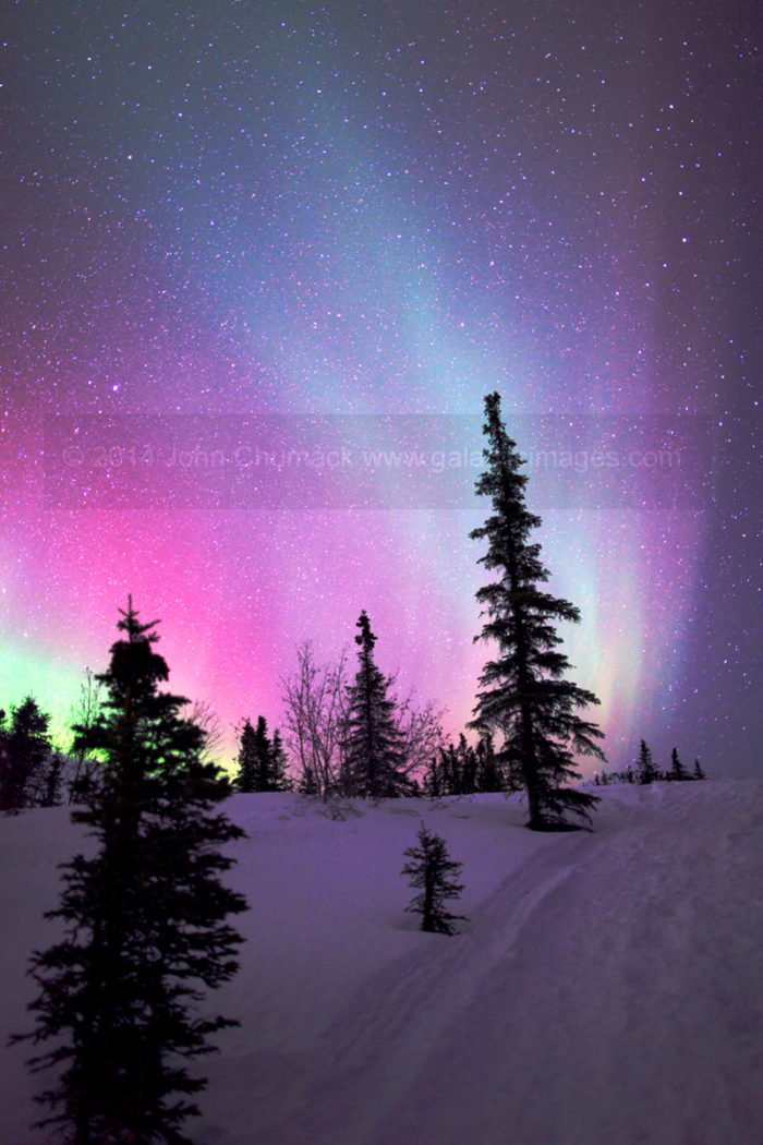 Alaskan Aurora Pines Photo #2643