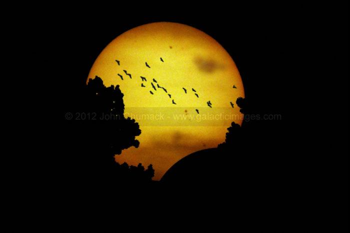Sunset Solar Eclipse Photos & The Birds