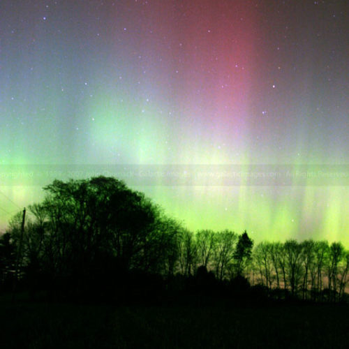 Aurora Borealis Photo over Trees V1