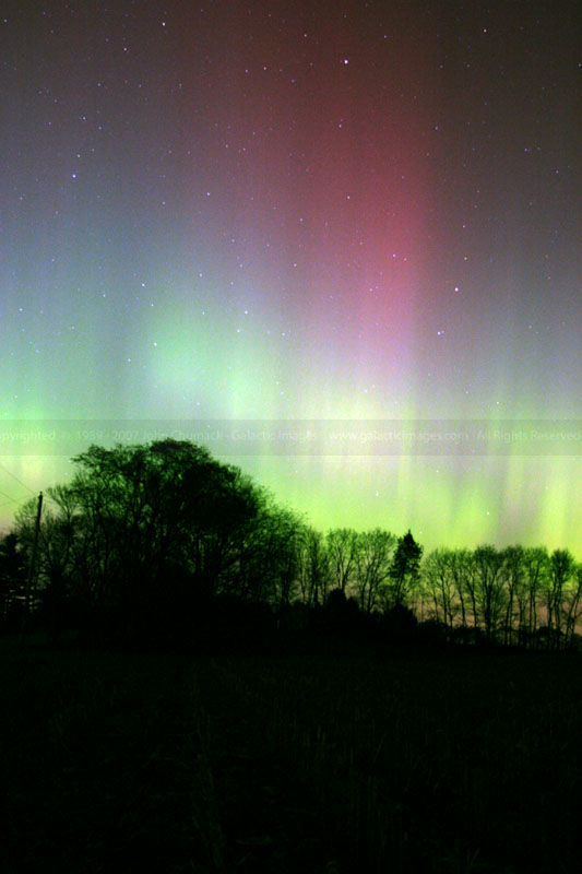 Aurora Borealis Photo over Trees V1